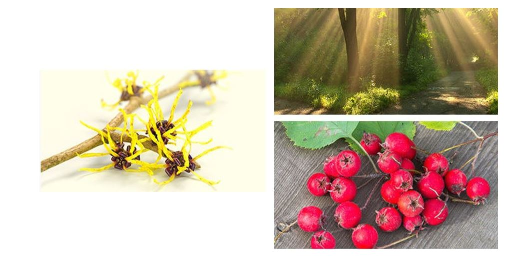 Apieu-Hamamelis-Toner-Ingredients